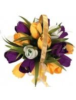 Любимый тюльпан